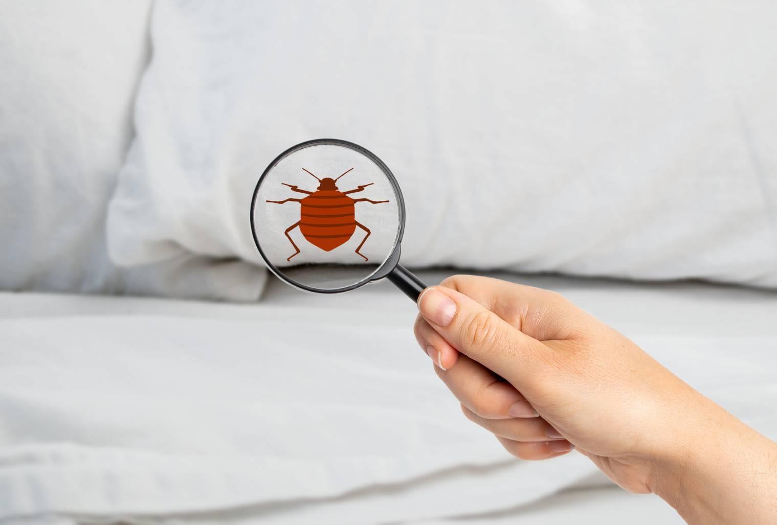 Comment détecter les punaises de lit ?